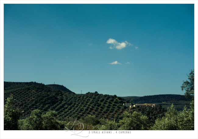 Olive trees of Ubeda, Spain - Sony RX100M3 at ISO320, 1/800 and f2.8